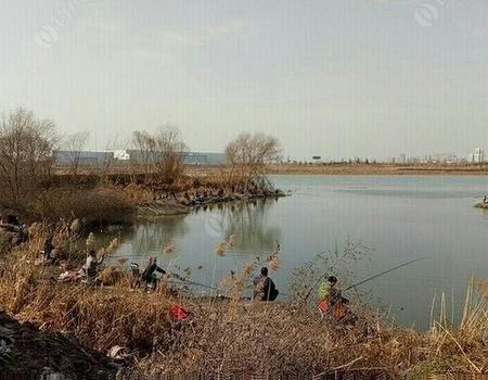 新河口釣鯽魚,告別空軍 蚯蚓餌料釣鯽魚