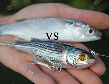 活鱼饵对路亚饵究竟哪家强?