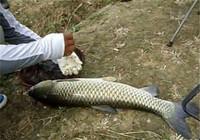 水库钓鱼避开鳙鱼的技巧