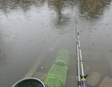 下雨?那都不是事! 釣魚之家餌料釣鯽魚
