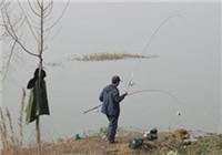 浅析冬季钓鱼遇到轻口鱼该如何应对