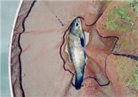 野河垂钓渔获满满各种鱼纷纷上钩
