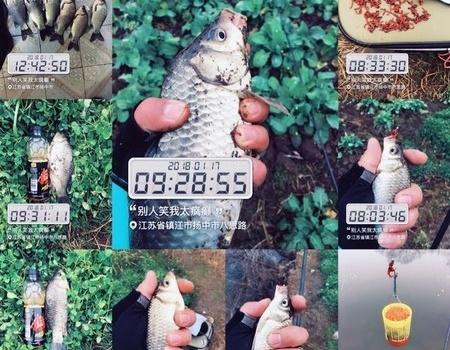 ①⑧年,传统~第三篇!!!(浅滩再逗大板) 红虫饵料钓鲫鱼