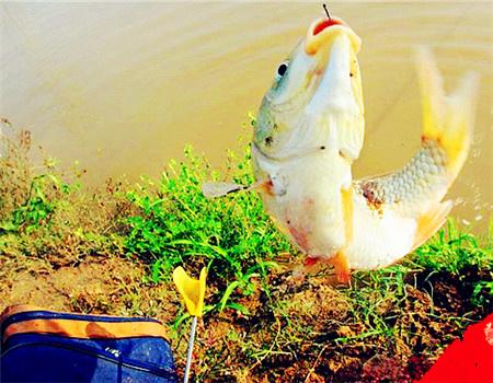 湖边野钓小记 冒雨出钓收获草青鲢鲮罗非鱼