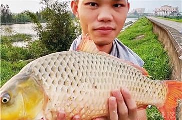 資深釣魚人西江之行垂釣日記分享