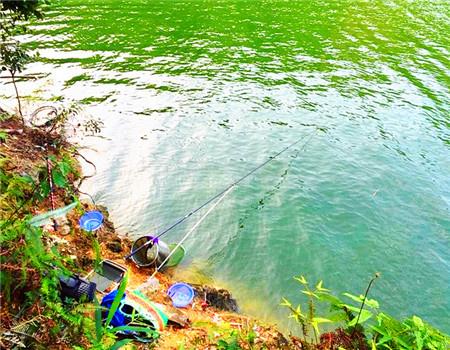 初三开钓喜获大鲤鱼,库钓单尾重量刷新个人手竿纪录。 龙王恨饵料钓鲮鱼