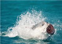 幾個常見魚種的生活習性分析