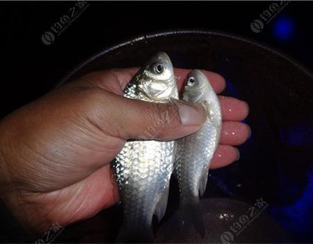 [原創]冬至五釣魚口爽