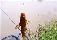 浅谈钓黄颡鱼最常用那些技巧