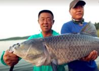 《游钓中国》第四季  第30集  放竿枣阳鳊鱼连竿 华阳河畔底物难寻