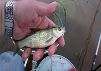 魚窩找的好,釣魚沒煩惱