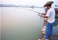 筏釣基礎技巧之線組如何搭配