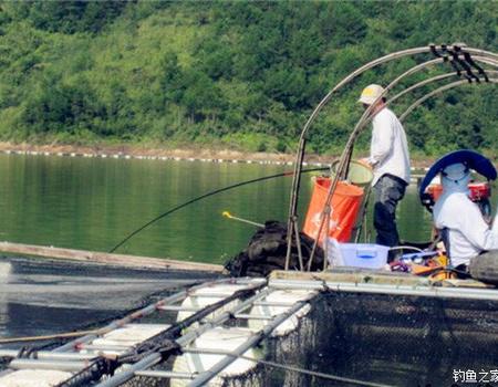 春季刮风天在湖库钓鲤钓鲢鳙技巧分享