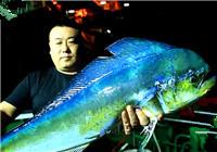 《海洋战士》20170223 东海深井搏击红章鱼