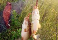 浅谈蚯蚓钓鱼饵三个挂钩技巧