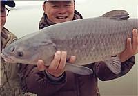 《垂钓学院》第三季74期 低温钓青鱼用饵技巧