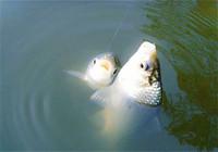 入春后水库钓鱼用饵技巧与调钓思路