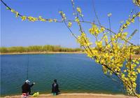 春季坑钓鲫鲤鱼饵料的选择与使用技巧