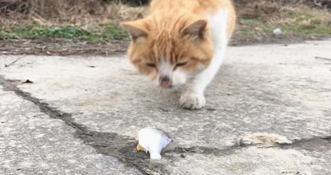 一人一猫几条鱼,岁末年初两相宜!