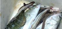 海钓最大的好处就是钓的鱼你不认识啊!