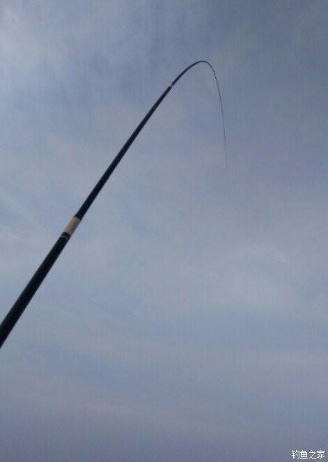 大板还是大板 红虫饵料钓鲫鱼