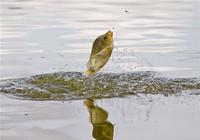 钓组搭配导致的钓鱼脱钩原因及应对办法