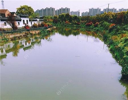 河道整治见成效。鲤鱼泛滥