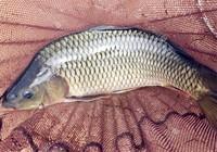 钓鲤鱼时所需要注意的亚博—亚洲的中文娱乐平台技巧