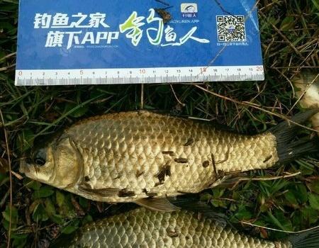 总结四月份的出钓鱼获总结,(基本还算可以) 自制饵料钓鲤鱼