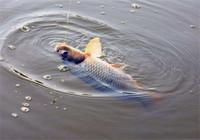 如何防止跑鱼之切线原因(下)