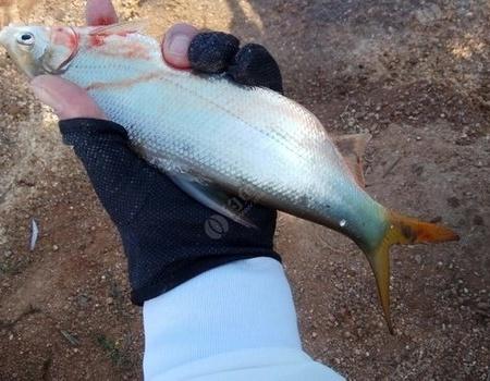 有风的天该是上鱼的好时机,可这风刮的让人很难掌握!