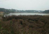 茶塘村坪塘水库