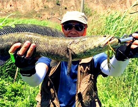 二探华塬黄河湿地,给网友交作业,米级巨黑出水 拟饵钓黑鱼