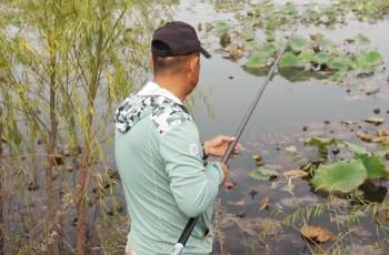 《游钓中国》第四季 第42集 藕塘轻装战鲫鱼 传统钓法出奇效