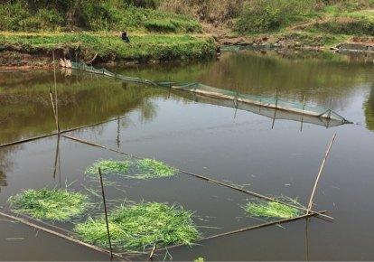 泸州金龙生态鱼塘
