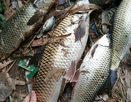 釣無定律,看我如何應對嚴重走水拉土鯪 自制餌料釣鯪魚