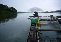 魚排浮釣或逗釣的筏釣技巧