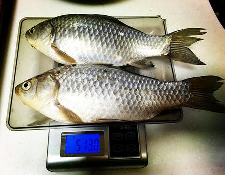 補上一帖——回看那豐收的四月 紅蟲餌料釣鯽魚