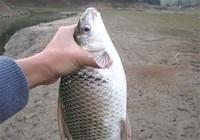 垂钓鲮鱼如何防止脱钩跑鱼现象