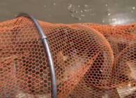 《麦子钓鱼》让大家见识一下什么才是真正的野钓爆护