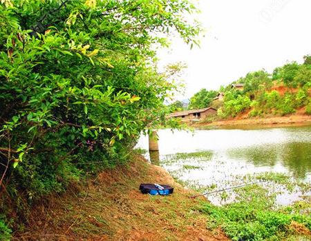 微风天,江河边上钓鳊鲫,我们要围草而钓