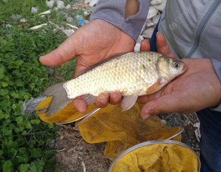 四处溜达,实在是不好找钓鱼的地方,熬不到秋天了又来到朴庄水库 化氏饵料钓鲢鳙鱼