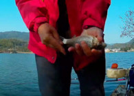 《麦子钓鱼》钓鱼实战 选好钓位 钓出不一样的鱼情