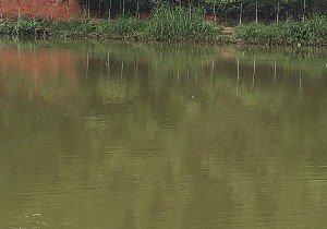 布贯欢乐钓鱼场