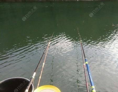 太平湖24小时 自制饵料钓鳊鱼