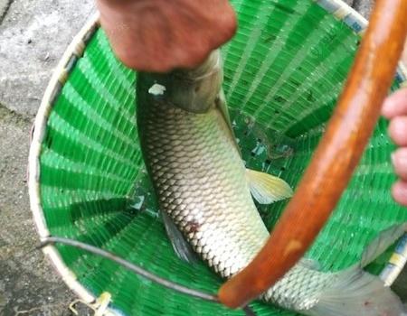 雨后继续,老丈人配个 自制饵料钓草鱼