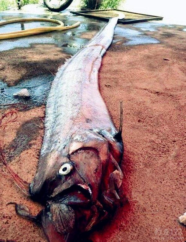 高清圖片 那些釣不到的怪魚 下