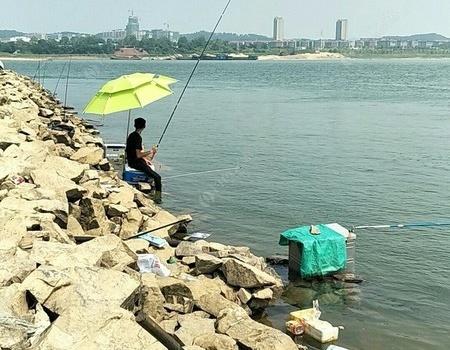 高温天气出钓赣江,鱼获主打扁鱼。