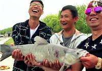 《黑坑江湖》第六季01集 初春钓乌青,体验上海大物塘