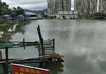 八福高密度钓鱼场